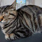 君津市北子安迷子猫