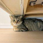 君津市中富迷い猫
